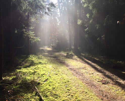 Waldweg, Waldbaden