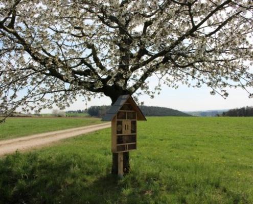 Obstbaum mit Insektenhotel
