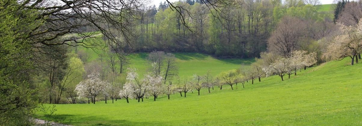 Obstbäume im Spalter Hügelland