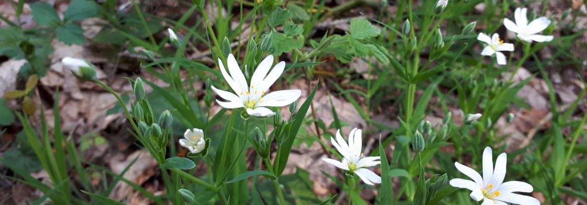 Waldblumen Ausflug Brombachsee