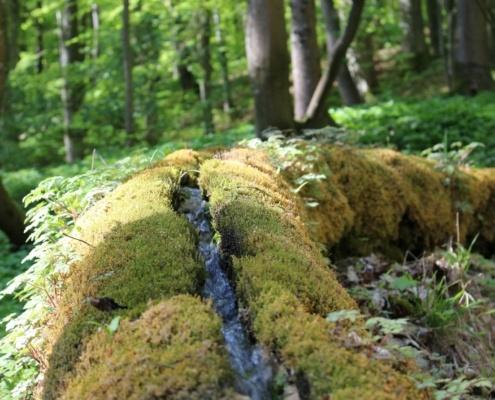 Steinerne Rinne Wolfsbron